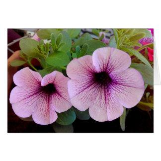 Two pink petunias card