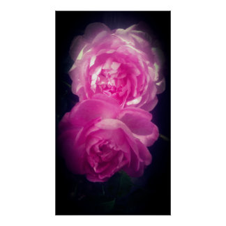 Two Pink Roses Poster