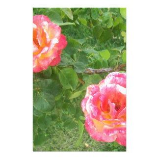 Two Pink & Yellow Spotted Roses on Green Stationery