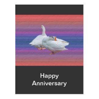 two playful white geese postcard