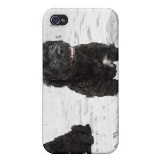 Two Portuguese Water Dog puppies in a room iPhone 4/4S Covers