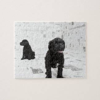 Two Portuguese Water Dog puppies in a room Jigsaw Puzzle