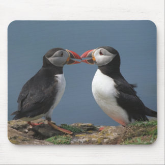 Two puffins mouse pad