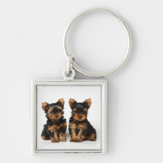 Two puppies key ring