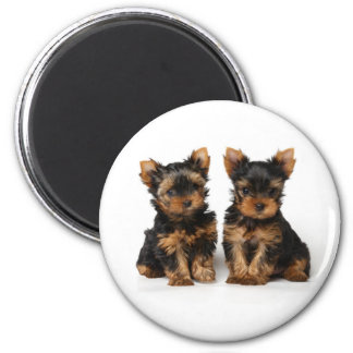 Two puppies magnet