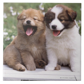 Two puppies sitting together ceramic tile