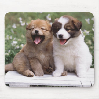 Two puppies sitting together mousepads