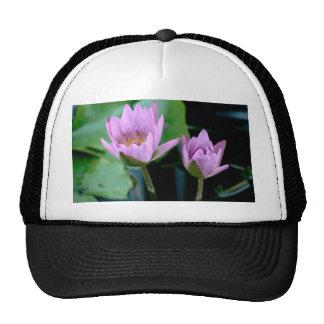 two purple water lilies hats