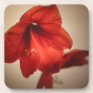 Two red amaryllis flowers coaster