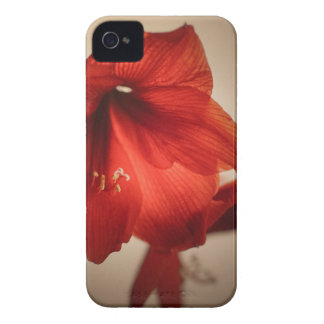 Two red amaryllis flowers iPhone 4 Case-Mate case