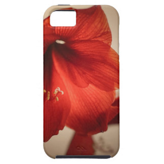 Two red amaryllis flowers iPhone 5 cases