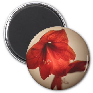 Two red amaryllis flowers magnet