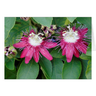 Two Red Passion Flowers Closeup Outdoors in Nature Card