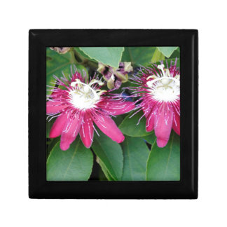 Two Red Passion Flowers Closeup Outdoors in Nature Gift Box