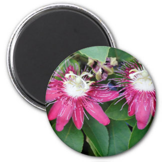 Two Red Passion Flowers Closeup Outdoors in Nature Magnet