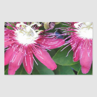 Two Red Passion Flowers Closeup Outdoors in Nature Rectangular Sticker