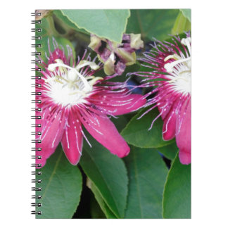 Two Red Passion Flowers Closeup Outdoors in Nature Spiral Notebook