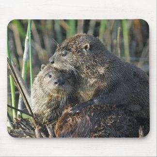 Two River Otters Mouse Pad