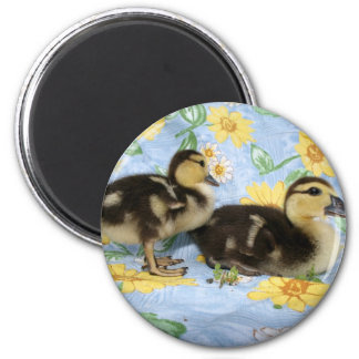 two rouen ducklings facing right one standing fridge magnet