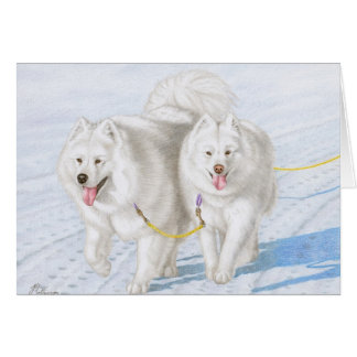 Two Samoyeds racing through the snow Card