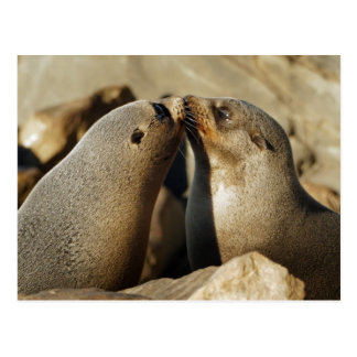 Two Seals Kissing Postcard