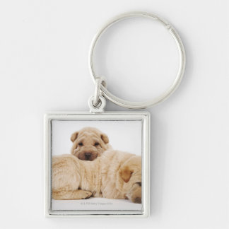 Two Shar Pei puppies sleeping, studio shot Key Ring