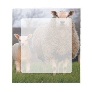 Two Sheep in Field Farmers Blank Paper Notepad