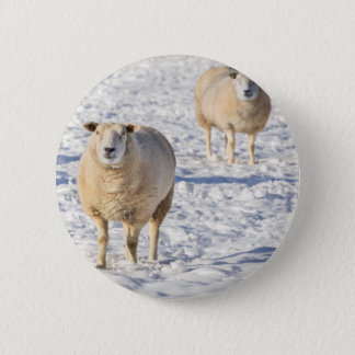 Two sheep standing in snow during winter 6 cm round badge