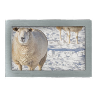 Two sheep standing in snow during winter belt buckles