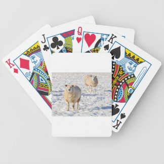Two sheep standing in snow during winter bicycle playing cards