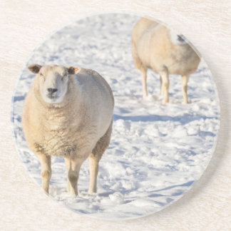 Two sheep standing in snow during winter coaster