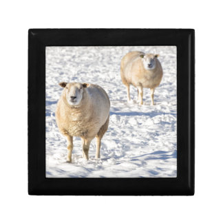 Two sheep standing in snow during winter gift box