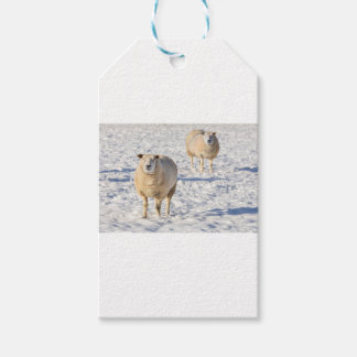 Two sheep standing in snow during winter gift tags