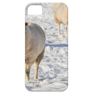 Two sheep standing in snow during winter iPhone 5 covers