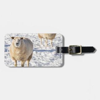 Two sheep standing in snow during winter luggage tag