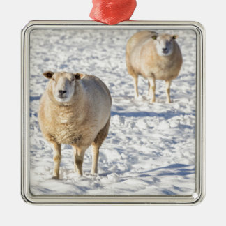 Two sheep standing in snow during winter metal ornament