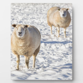Two sheep standing in snow during winter plaque
