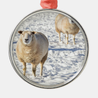 Two sheep standing in snow during winter Silver-Colored round decoration
