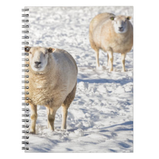 Two sheep standing in snow during winter spiral notebook