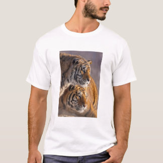 Two Siberian tigers together, China T-Shirt