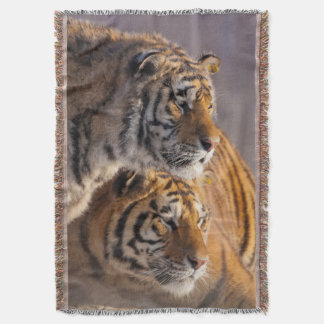 Two Siberian tigers together, China Throw Blanket