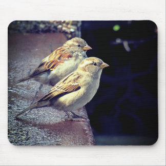 two sparrows mouse pad