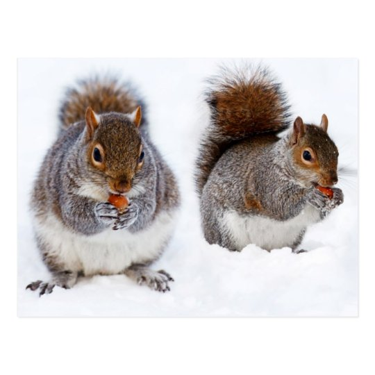 Two Squirrels Busy Eating Nuts Postcard
