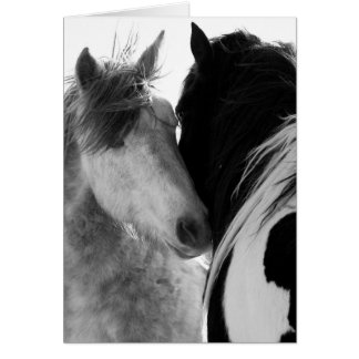 Two Stallions Wild Horse Greeting Card