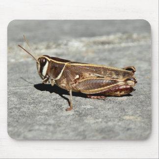 Two-Striped Grasshopper Mouse Mat