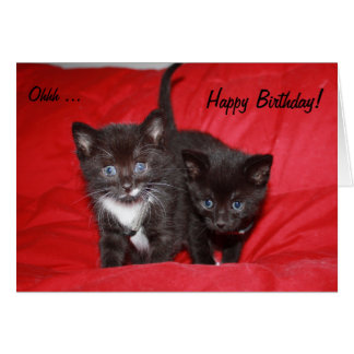 Two sweet Kittens wish a Happy Birthday! Greeting Card