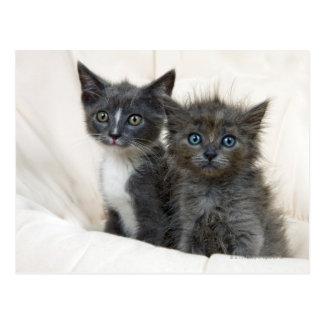 Two tabby kittens postcard