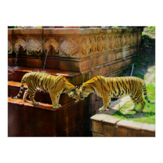 Two Tigers Poster