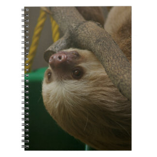 Two Toed Sloth Spiral Notebook