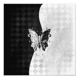 Two Tone Butterfly Photo